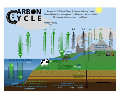 Image of interactive carbon cycle simulation