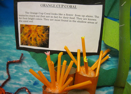 Orange Cup Coral art work